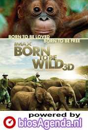 Born to Be Wild poster, copyright in handen van productiestudio en/of distributeur
